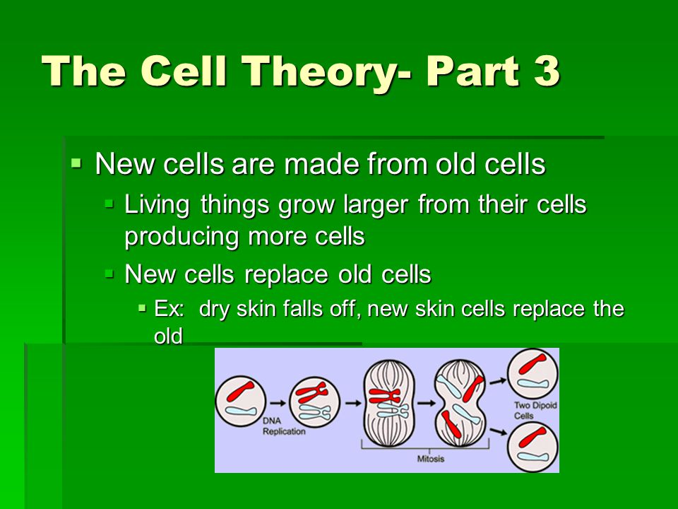 The Cell Theory- Part 3 New cells are made from old cells
