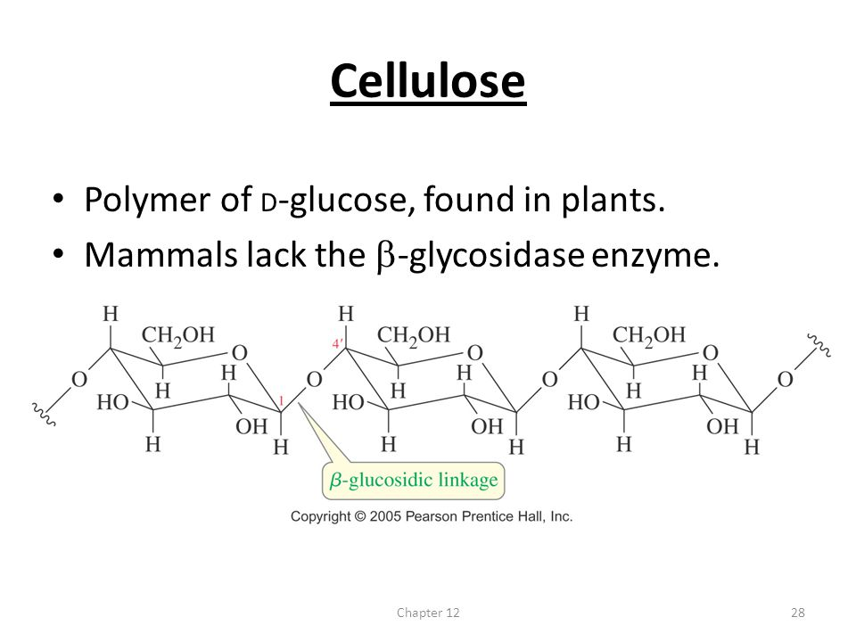 Cellulose Polymer of D-glucose, found in plants.