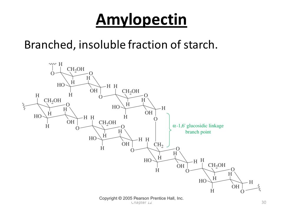 Amylopectin Branched, insoluble fraction of starch. Chapter 12