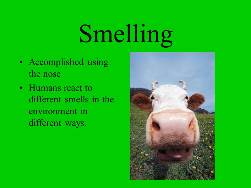 Smelling Accomplished using the nose