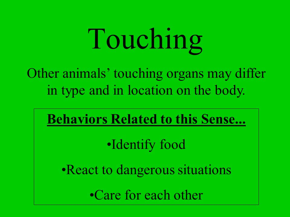 Touching Other animals' touching organs may differ in type and in location on the body. Behaviors Related to this Sense...