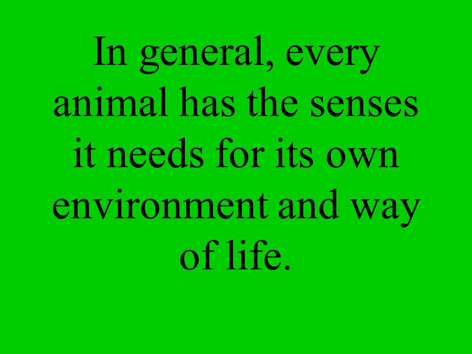 In general, every animal has the senses it needs for its own environment and way of life.