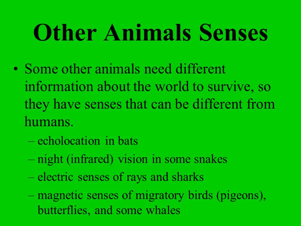 Other Animals Senses Some other animals need different information about the world to survive, so they have senses that can be different from humans.