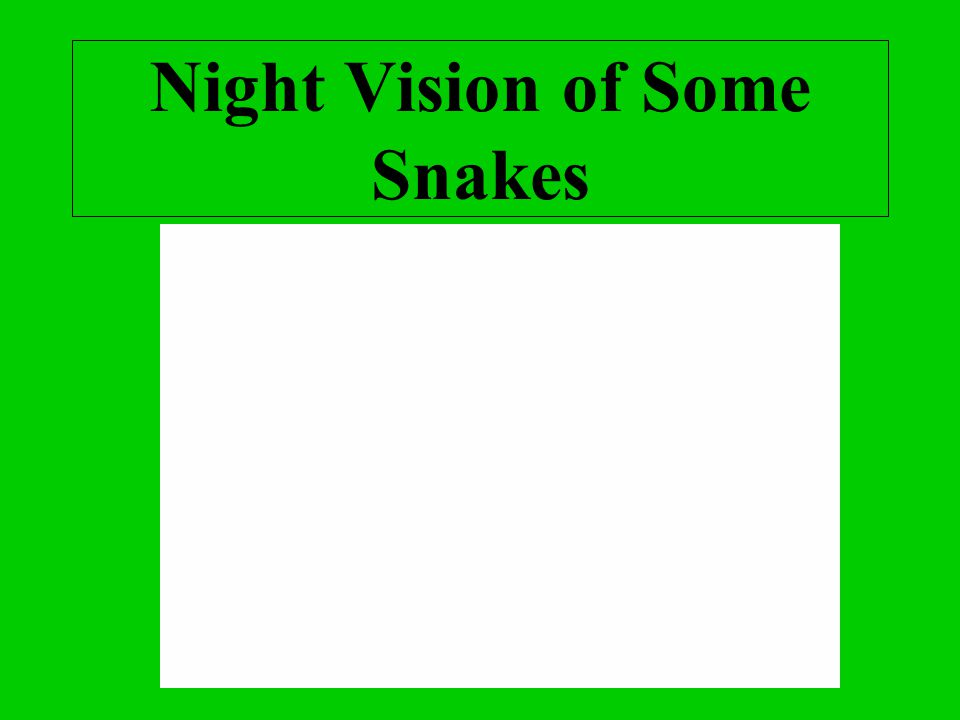 Night Vision of Some Snakes