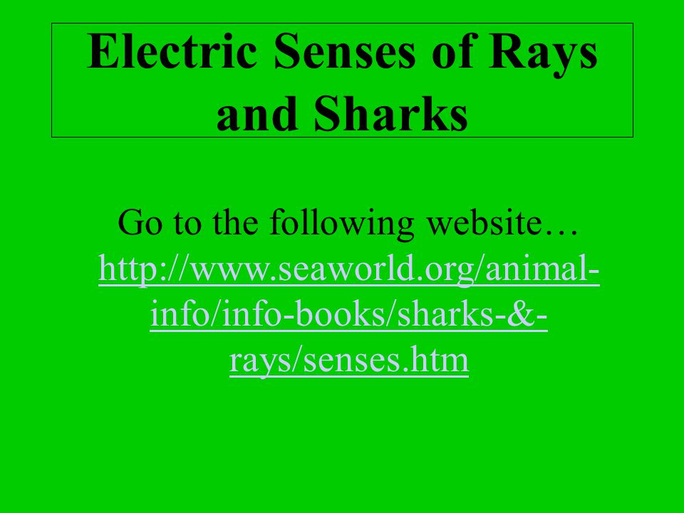 Electric Senses of Rays and Sharks