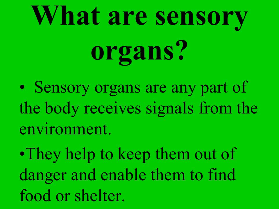 What are sensory organs
