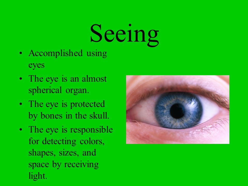 Seeing Accomplished using eyes The eye is an almost spherical organ.