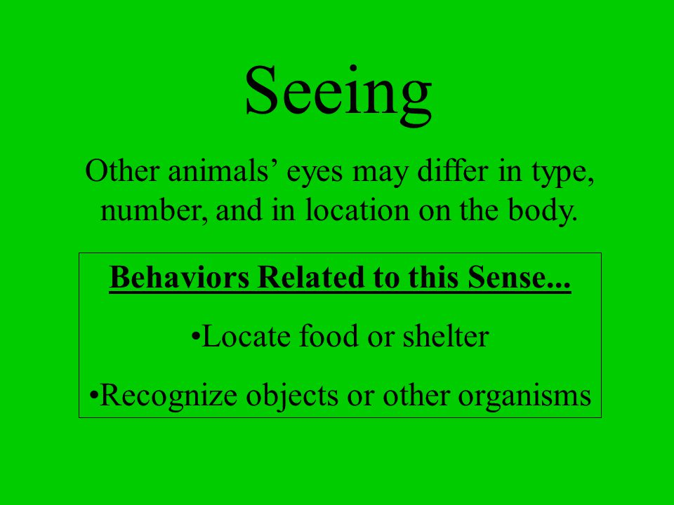 Seeing Other animals' eyes may differ in type, number, and in location on the body. Behaviors Related to this Sense...