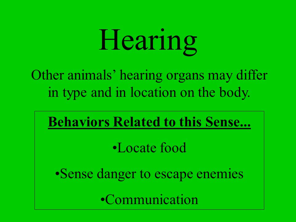 Hearing Other animals' hearing organs may differ in type and in location on the body. Behaviors Related to this Sense...