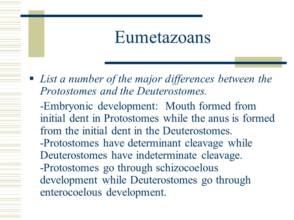 Eumetazoans List a number of the major differences between the Protostomes and the Deuterostomes.