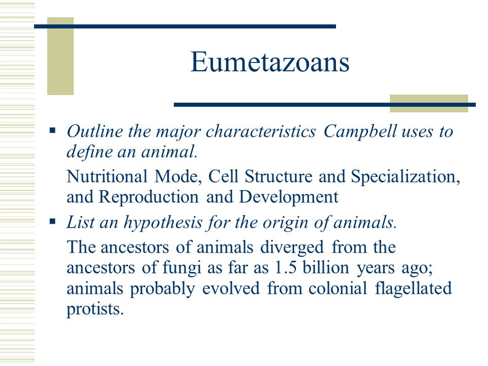 Eumetazoans Outline the major characteristics Campbell uses to define an animal.