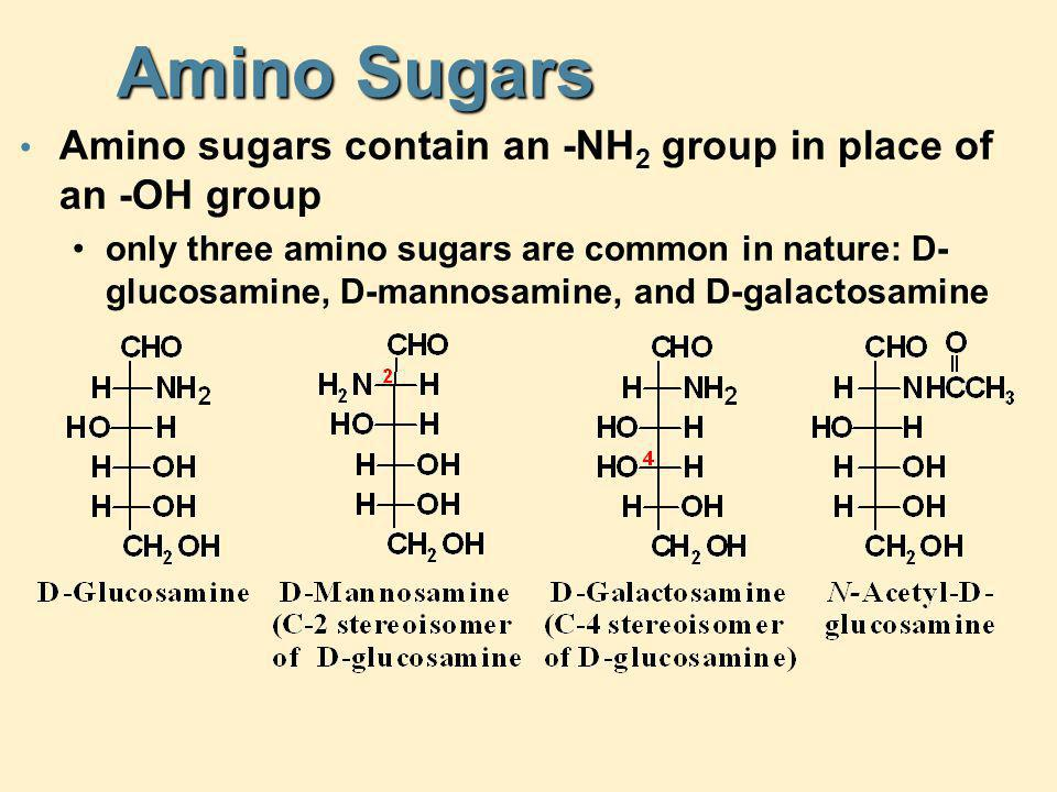 Amino Sugars Amino sugars contain an -NH2 group in place of an -OH group.