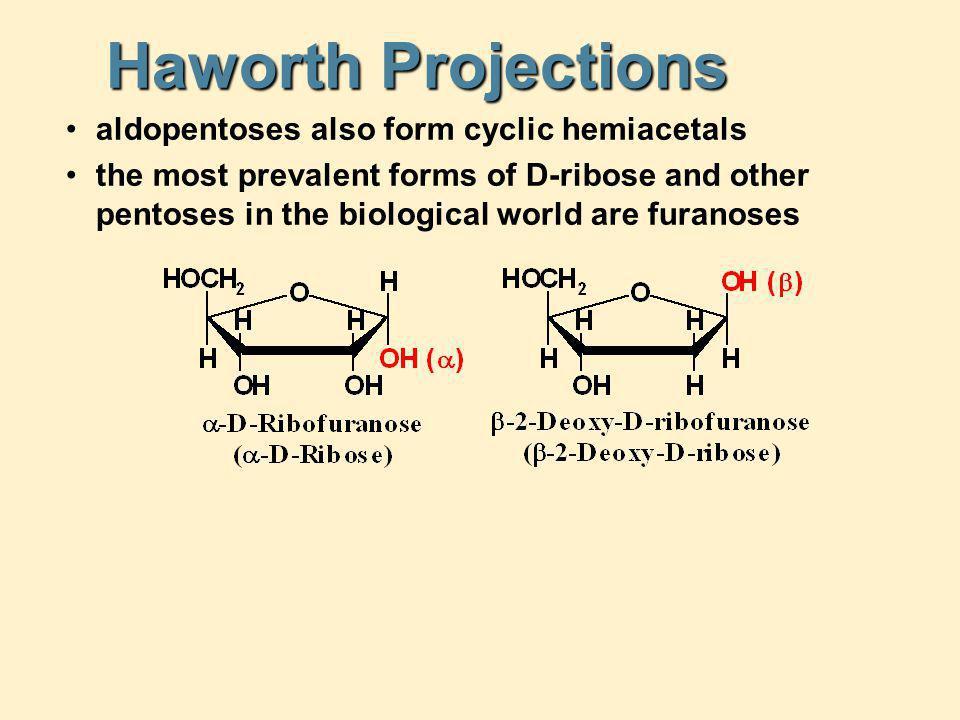 Haworth Projections aldopentoses also form cyclic hemiacetals