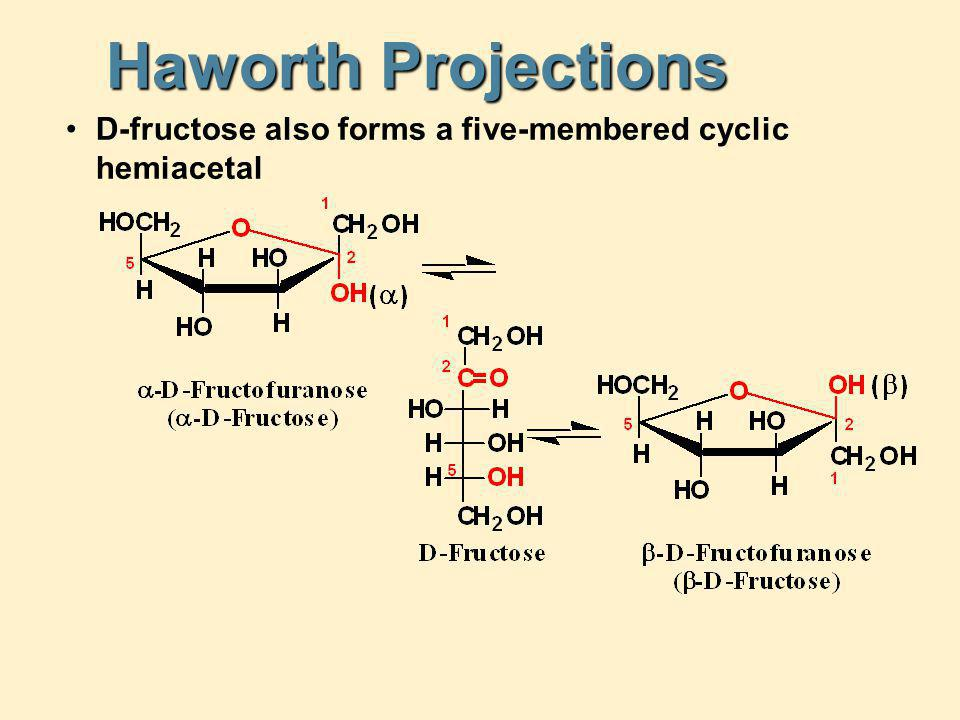 Haworth Projections D-fructose also forms a five-membered cyclic hemiacetal
