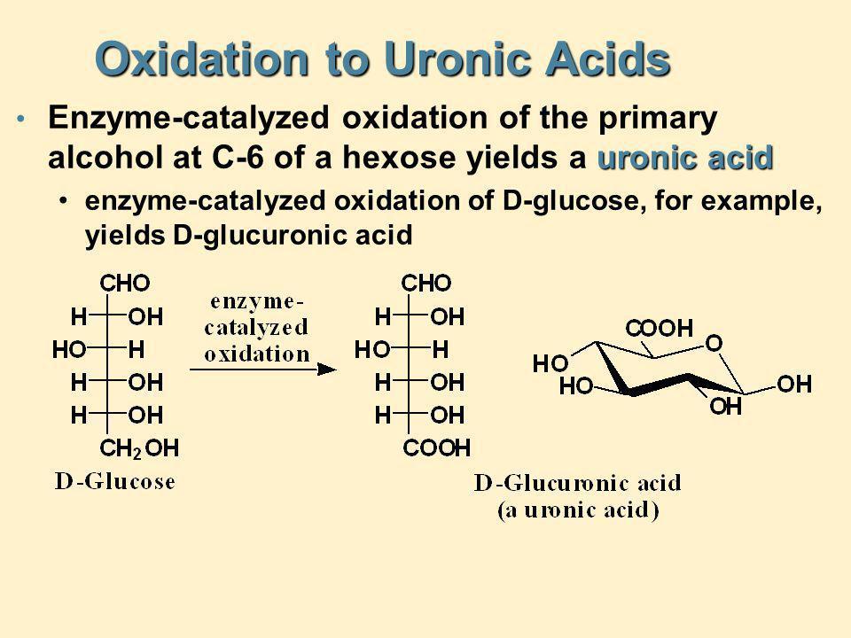Oxidation to Uronic Acids