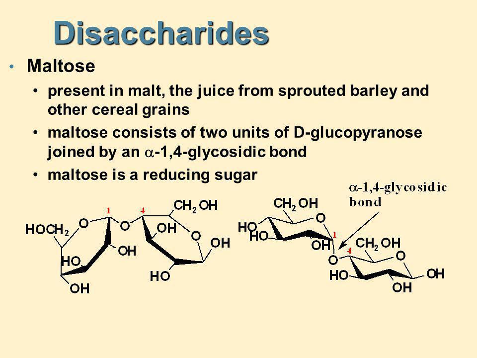 Disaccharides Maltose