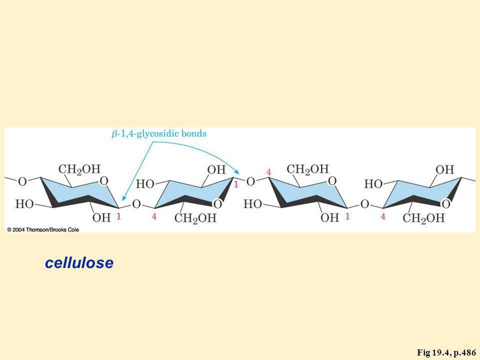 cellulose Fig 19.4, p.486