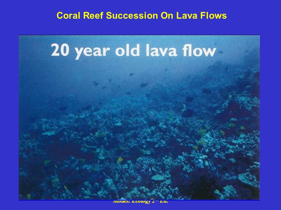 Coral Reef Succession On Lava Flows