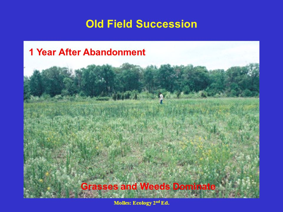 Old Field Succession 1 Year After Abandonment