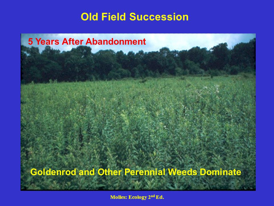 Old Field Succession 5 Years After Abandonment