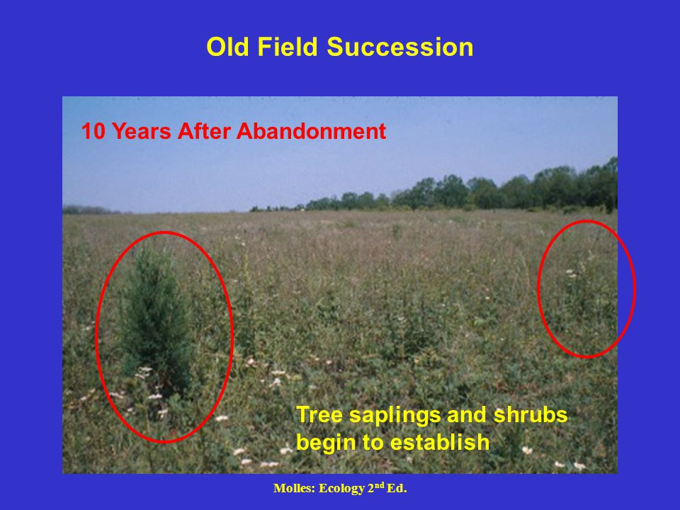 Old Field Succession 10 Years After Abandonment