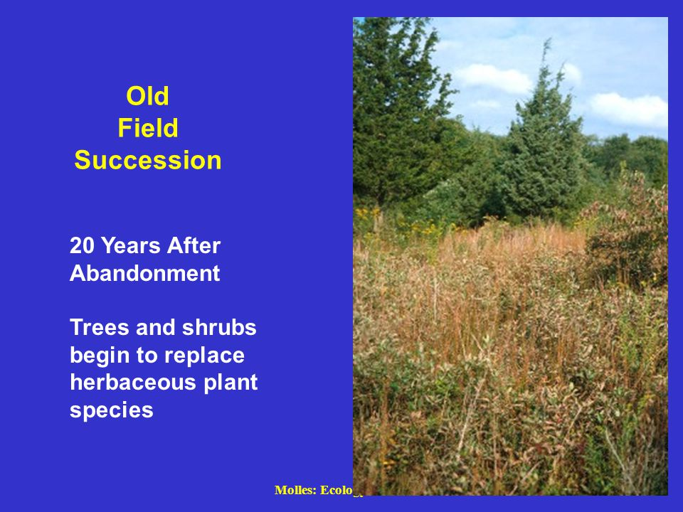 Old Field Succession 20 Years After Abandonment Trees and shrubs