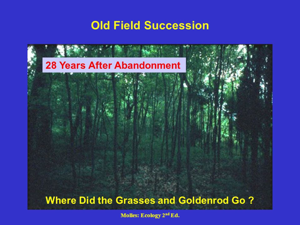 Old Field Succession 28 Years After Abandonment