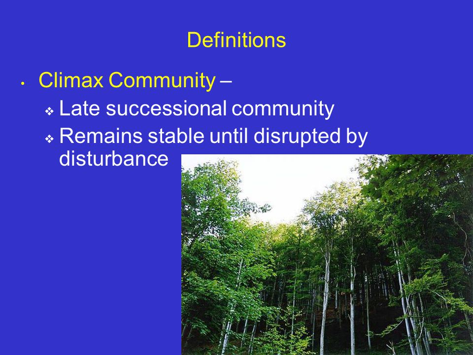 Late successional community