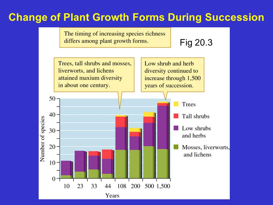 Change of Plant Growth Forms During Succession