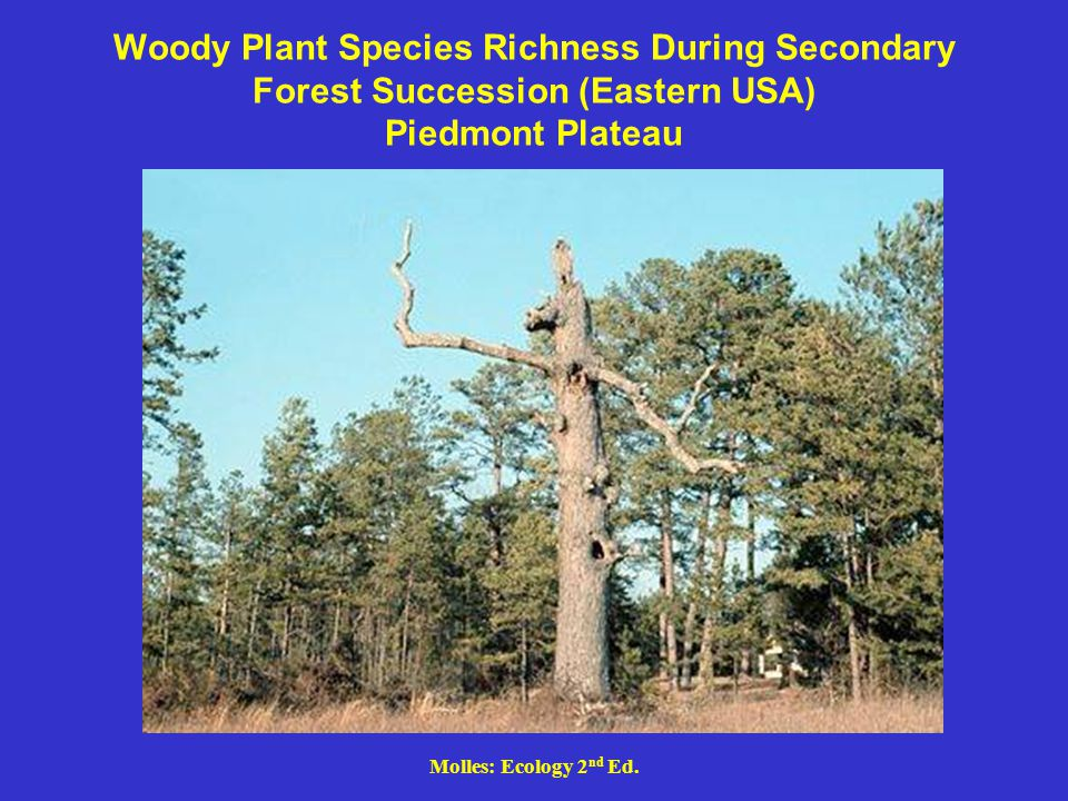 Woody Plant Species Richness During Secondary Forest Succession (Eastern USA) Piedmont Plateau