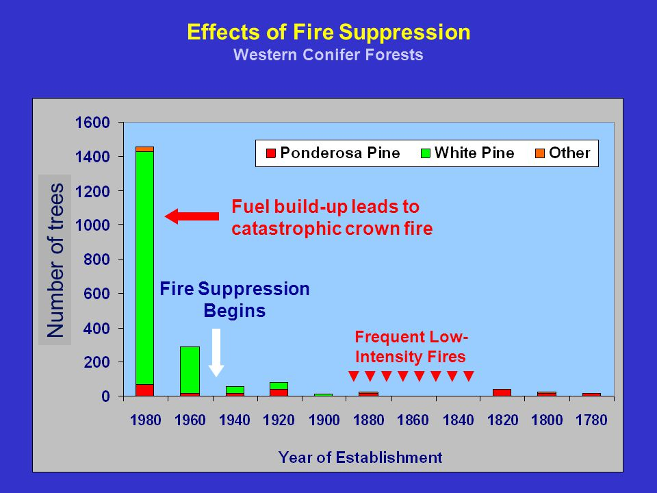 Effects of Fire Suppression Western Conifer Forests