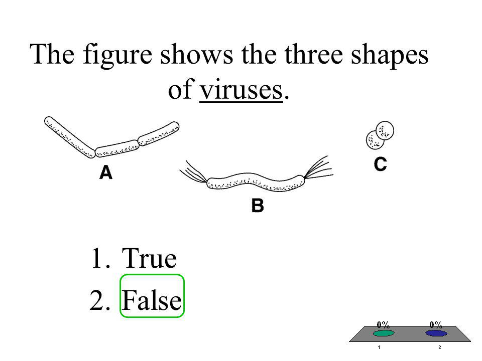 The figure shows the three shapes of viruses.