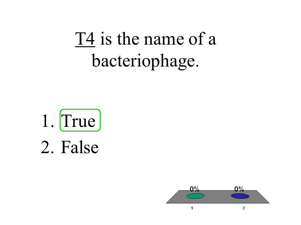 T4 is the name of a bacteriophage.