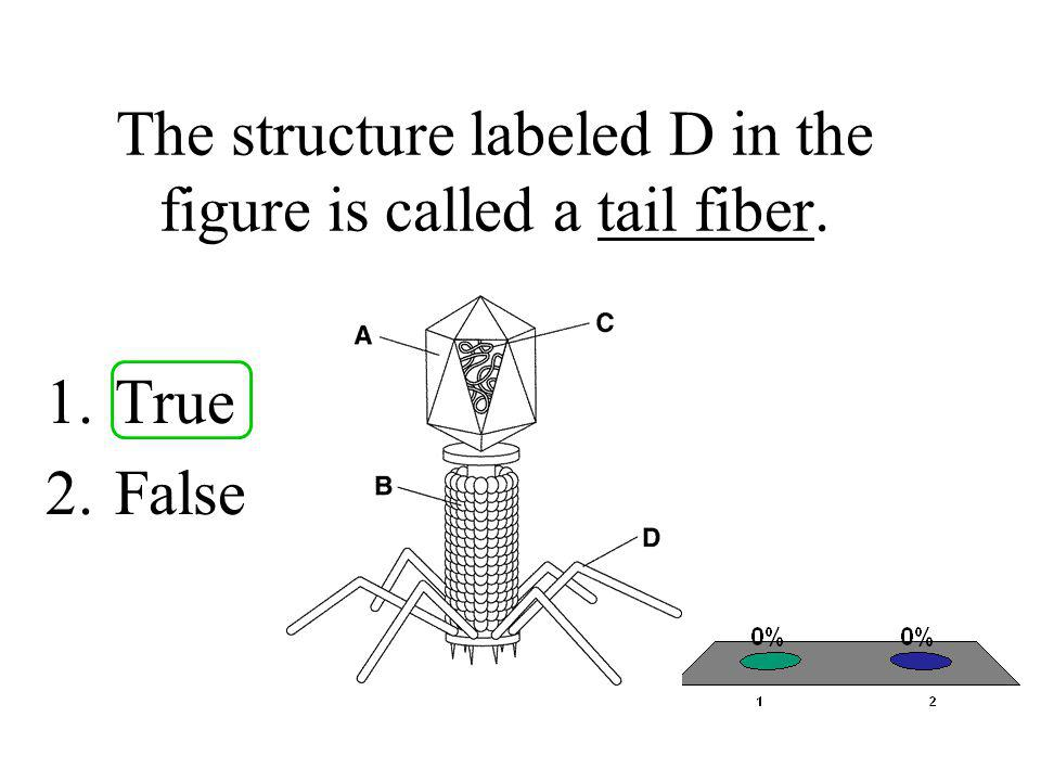 The structure labeled D in the figure is called a tail fiber.