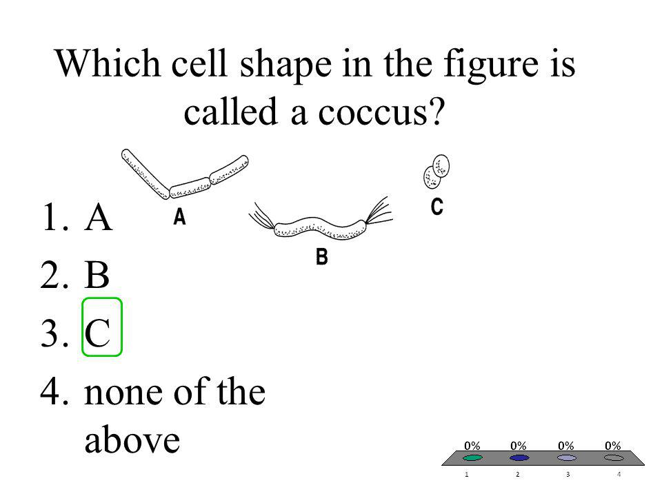 Which cell shape in the figure is called a coccus
