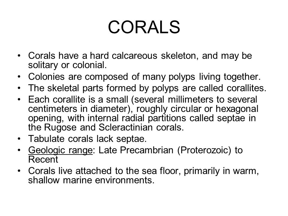 CORALS Corals have a hard calcareous skeleton, and may be solitary or colonial. Colonies are composed of many polyps living together.