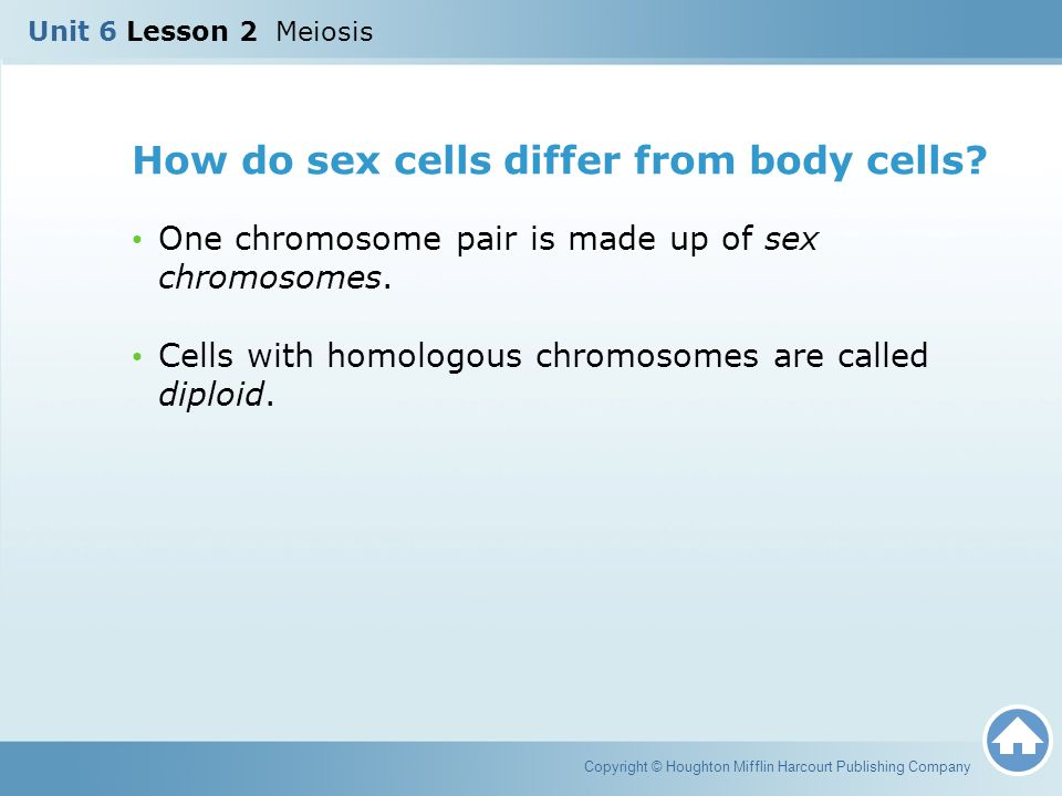 How do sex cells differ from body cells