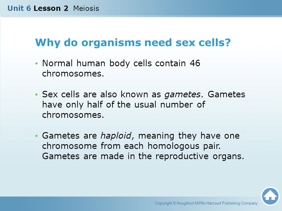 Why do organisms need sex cells