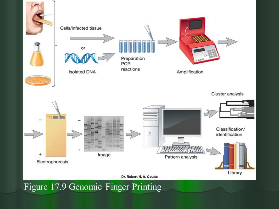 Figure 17.9 Genomic Finger Printing