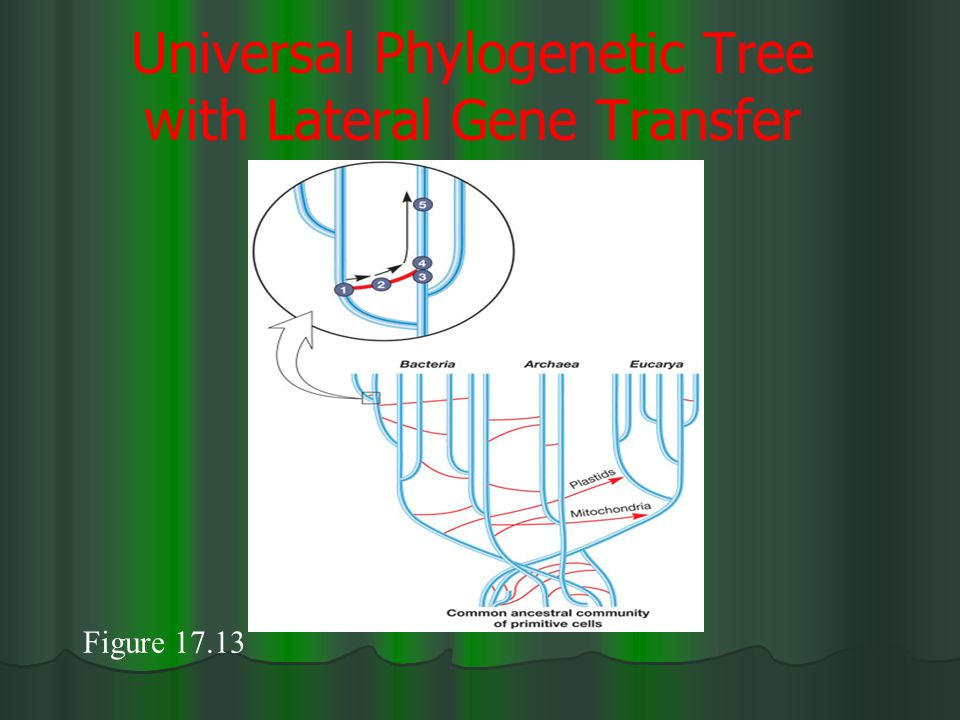 Universal Phylogenetic Tree with Lateral Gene Transfer