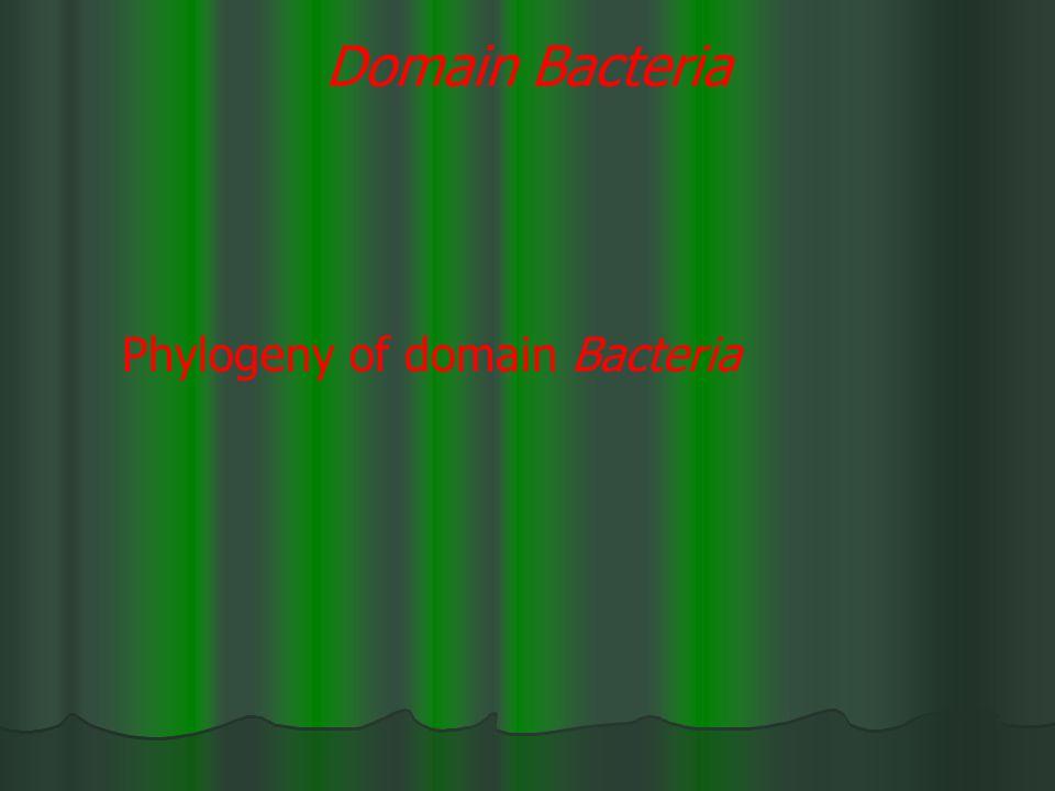 Domain Bacteria Phylogeny of domain Bacteria