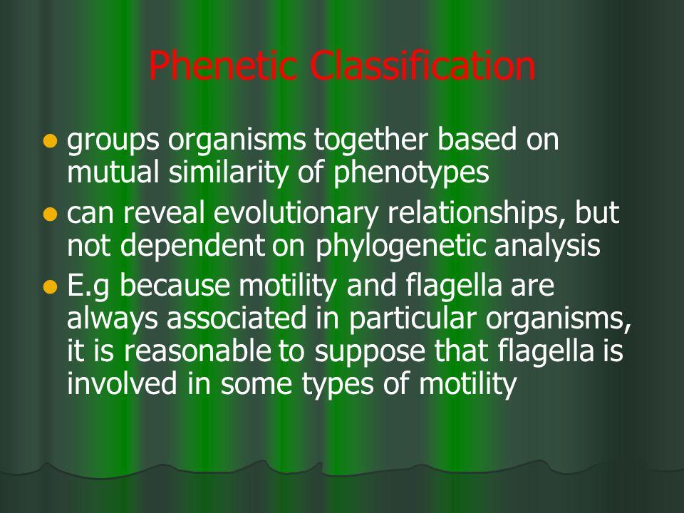 Phenetic Classification