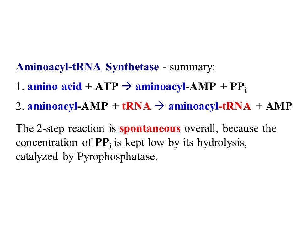 Aminoacyl-tRNA Synthetase - summary: