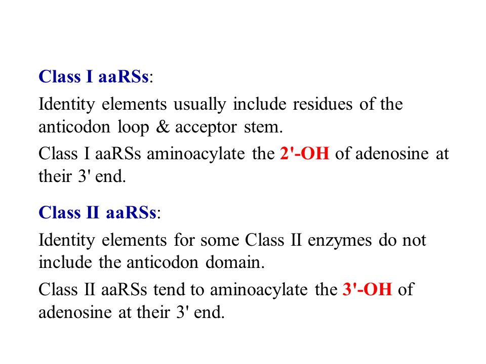 Class I aaRSs: Identity elements usually include residues of the anticodon loop & acceptor stem.