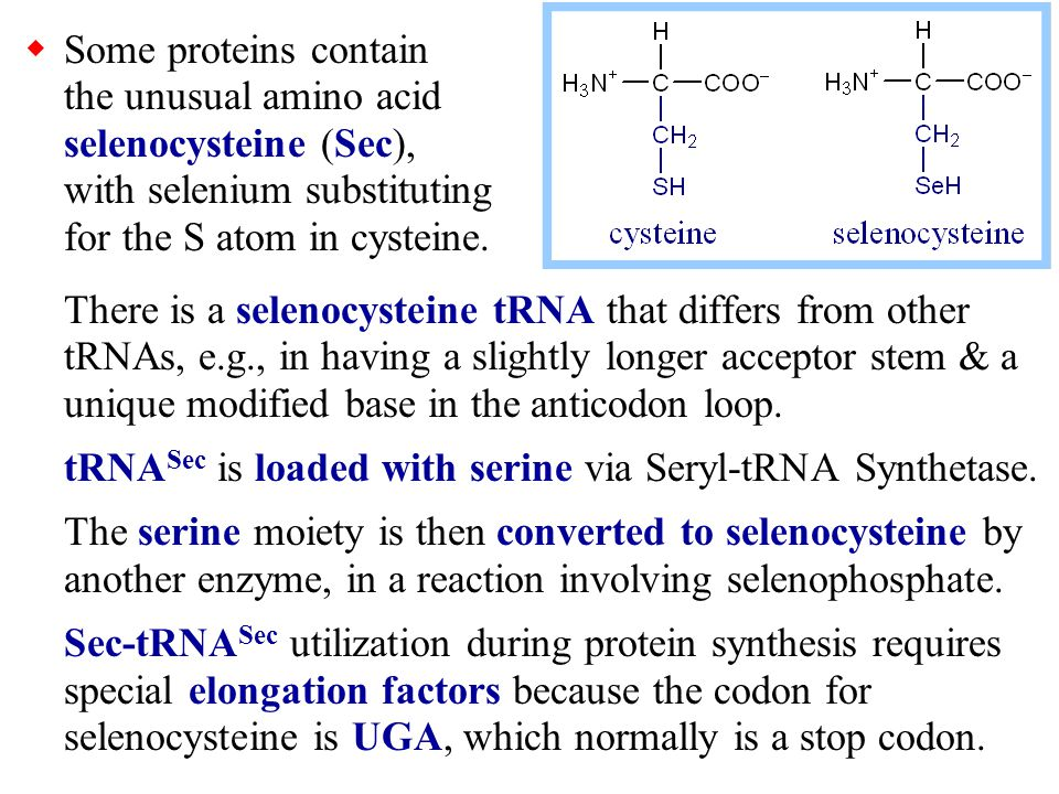 Some proteins contain the unusual amino acid selenocysteine (Sec), with selenium substituting for the S atom in cysteine.