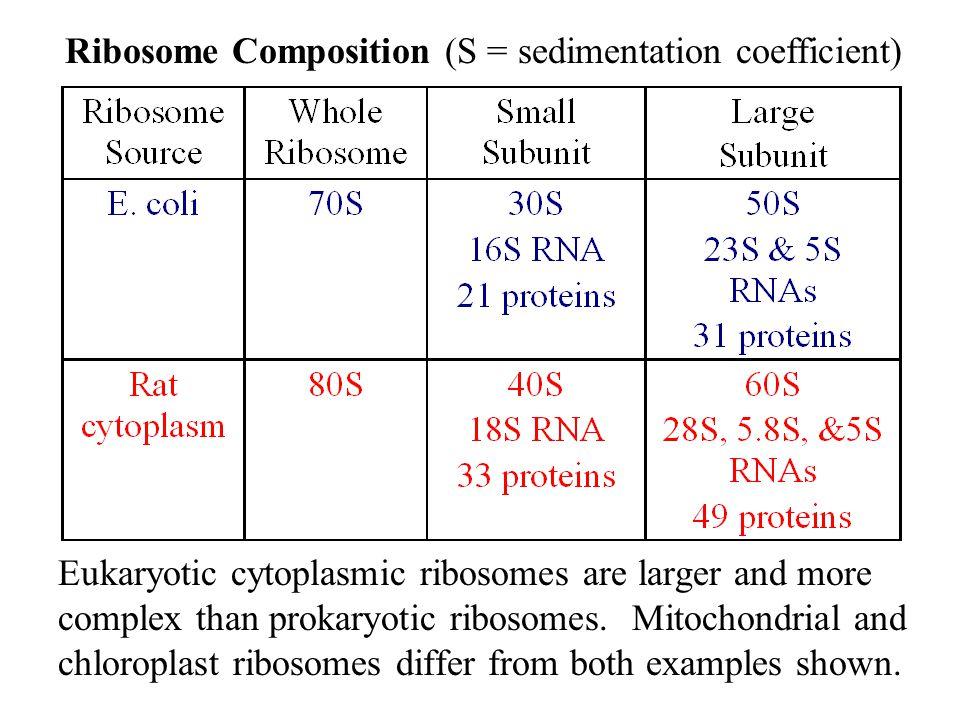 Ribosome Composition (S = sedimentation coefficient)