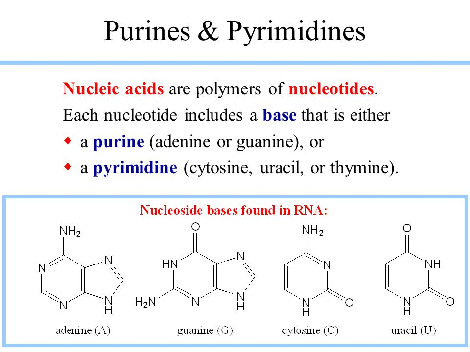 Purines & Pyrimidines Nucleic acids are polymers of nucleotides.