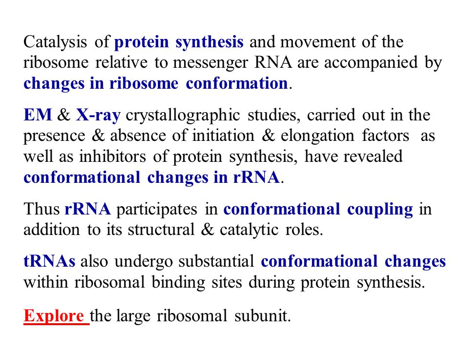 Catalysis of protein synthesis and movement of the ribosome relative to messenger RNA are accompanied by changes in ribosome conformation.
