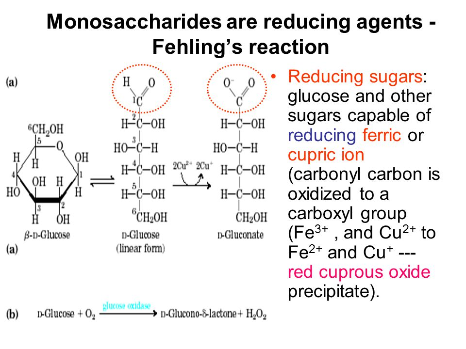 Monosaccharides are reducing agents - Fehling's reaction