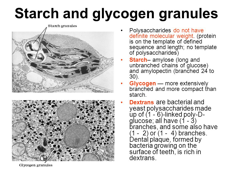 Starch and glycogen granules